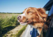evcil-hayvanınızla-araba-yolculuğu