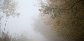 sis farları
